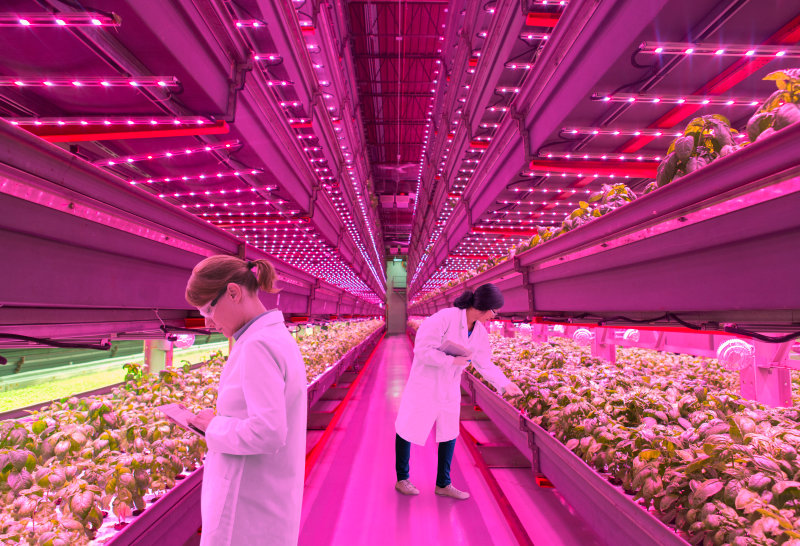 Horticulture Lighting: Think Pink!