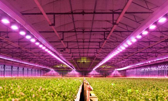 Horticulture-Beleuchtung - Komponenten, Produkte und Systeme