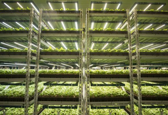Fluence Horticulture Lighting