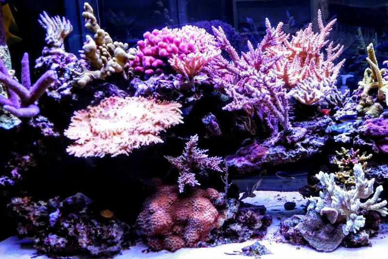 Osram Opto Semiconductors' Oslon LEDs aid in the creation of ultimate LED reef aquarium fixtures