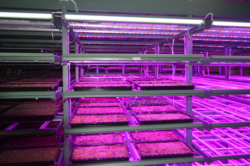 FarmEcology: Osram Lights the Way to better Food at Vertical Farm