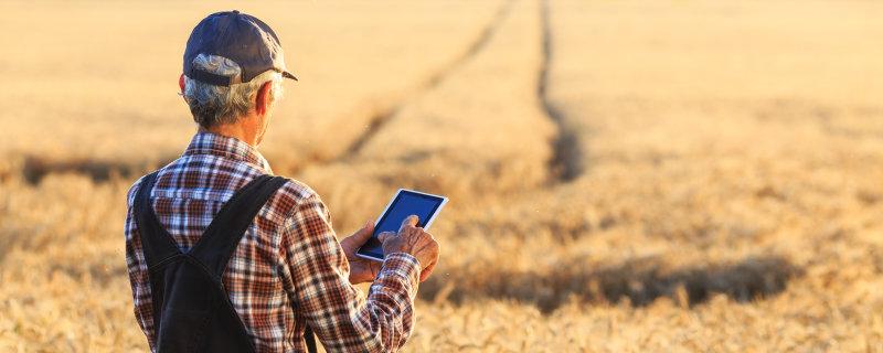 Osram's neue breitbandige Infrarot-LED unterstützt Landwirte bei der optimalen Ernteplanung