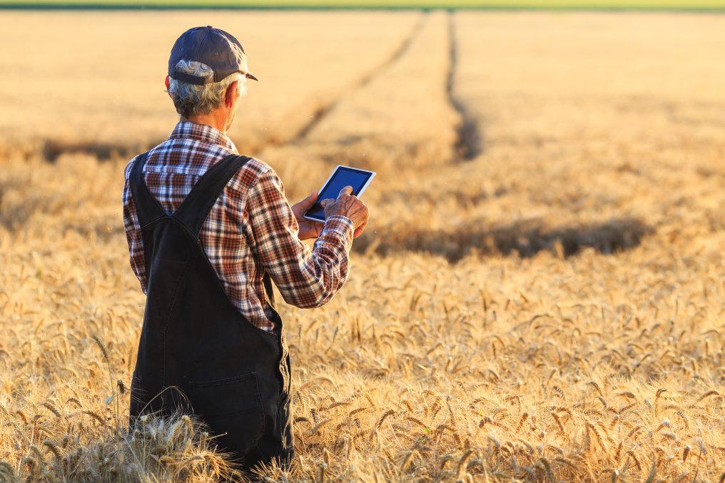 Die SFH 4736 hilft dem Landwirt dabei, den Wachstumsprozess seiner Feldfrüchte zu überwachen und den idealen Erntezeitpunkt zu planen.