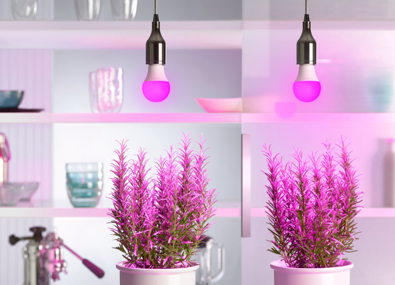 Purple Power for Horticulture Lighting